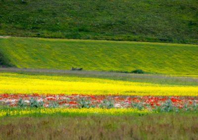 fioritura-castelluccio-25-giugno-2020-01