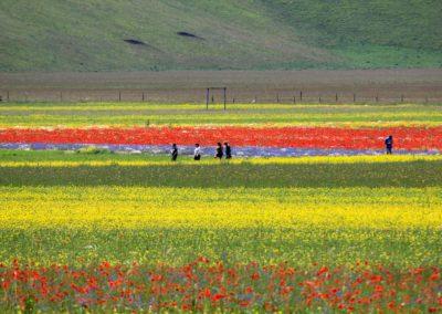fioritura-castelluccio-25-giugno-2020-05