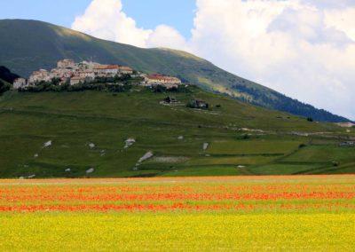 fioritura-castelluccio-25-giugno-2020-06