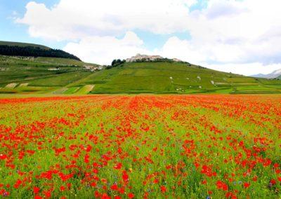 fioritura-castelluccio-25-giugno-2020-08