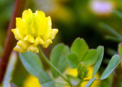 fioritura-spontanea-02-luglio-2020-02