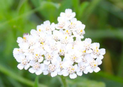 fioritura-spontanea-02-luglio-2020-09