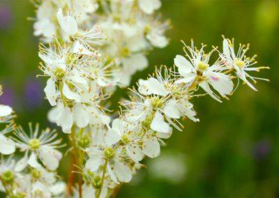 fioritura-spontanea-02-luglio-2020-10