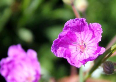 fioritura-spontanea-04-06-2020-03