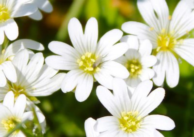 fioritura-spontanea-04-06-2020-5