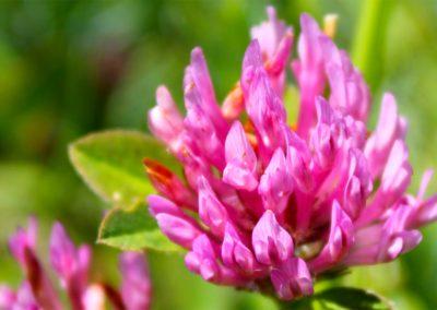 fioritura-spontanea-04-06-2020-6