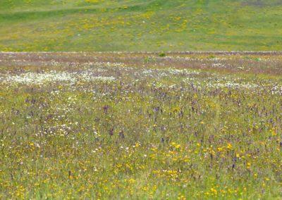 fioritura-spontanea-04-06-2020-7