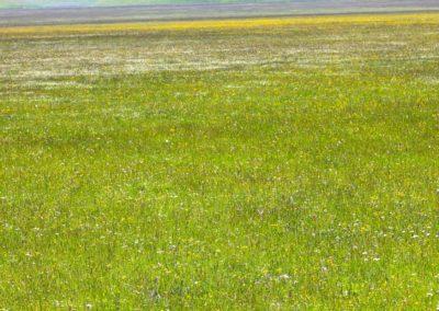 fioritura-spontanea-04-06-2020-8