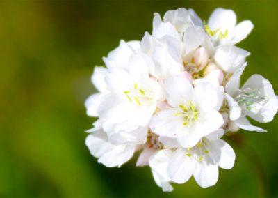 fioritura-spontanea-04-06-2020-9