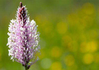 fioritura-spontanea-04-06-2020-9b