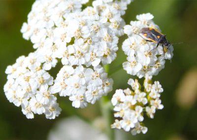 fioritura-spontanea-09-luglio-2020-03