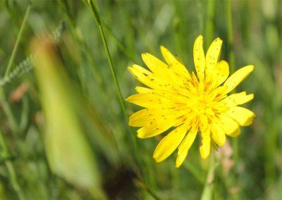 fioritura-spontanea-09-luglio-2020-04