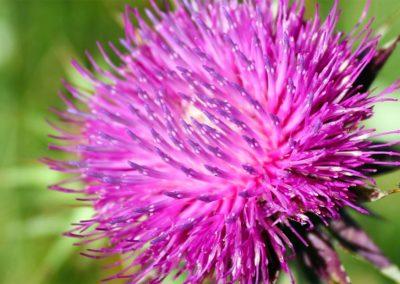 fioritura-spontanea-09-luglio-2020-05