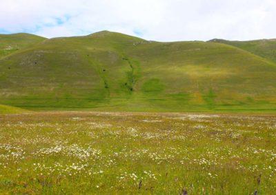 fioritura-spontanea-11-06-20-01