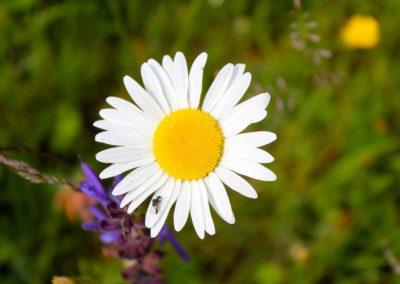 fioritura-spontanea-11-06-20-04