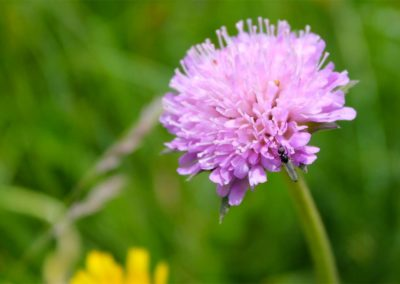 fioritura-spontanea-11-06-20-06