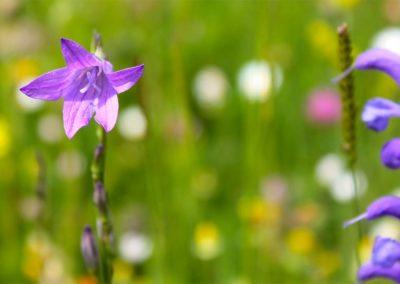 fioritura-spontanea-11-06-20-07