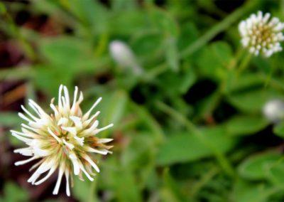 fioritura-spontanea-11-06-20-08