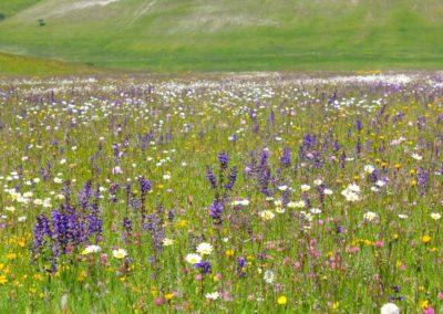 fioritura-spontanea-18-06-20-02