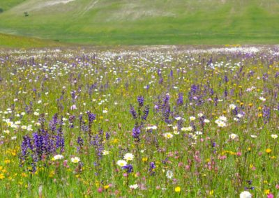 fioritura spontanea 18 giugno 2020
