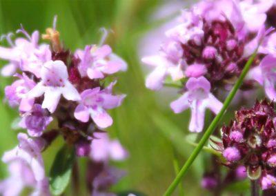 fioritura-spontanea-18-06-20-03