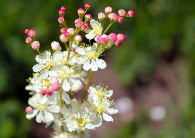 fioritura-spontanea-18-06-20-04