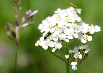 fioritura-spontanea-18-06-20-07