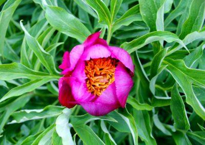 fioritura-spontanea-2020-05-28-04