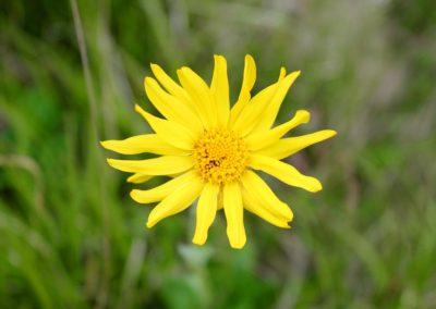 fioritura-spontanea-2020-05-28-05