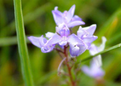fioritura-spontanea-2020-05-28-07