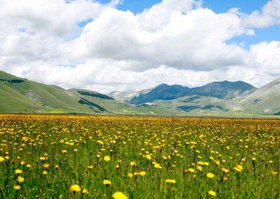 fioritura-spontanea-25-giugno-2020-01