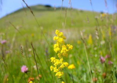 fioritura-spontanea-25-giugno-2020-08