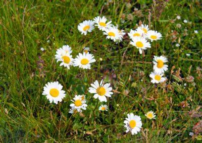 fioritura-spontanea-25-giugno-2020-11