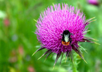 fioritura-spontanea-25-giugno-2020-13