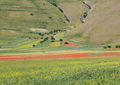 campi coltivati 01 07 2021