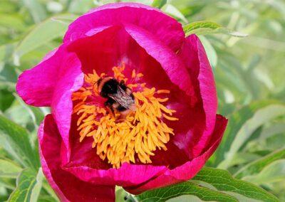 fioritura spontanea giugno 2021