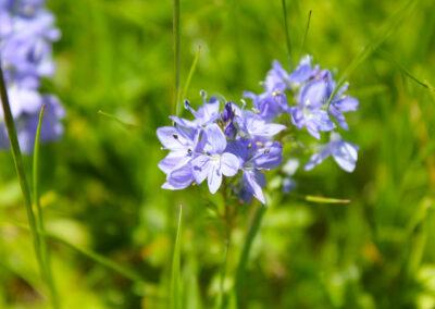 fioritura spontanea maggio 2021